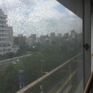 窓ガラス清掃前